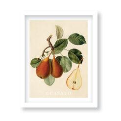 tavla vintage pear