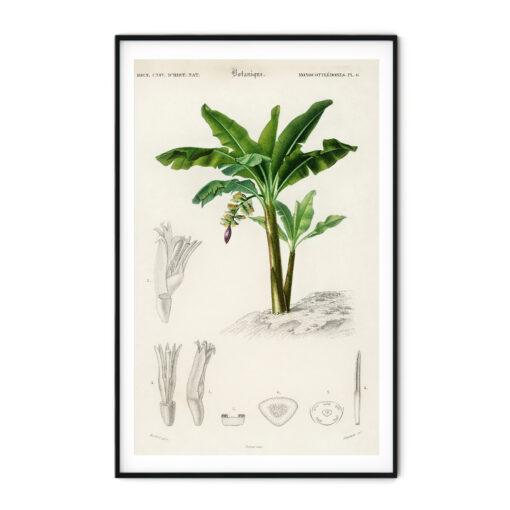 tavla palm