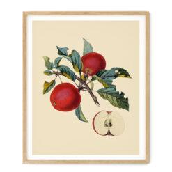 Tavla Äpple