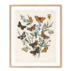 Tavla fjäril