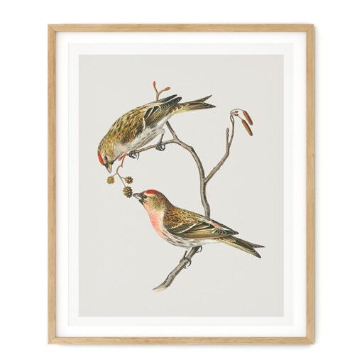 Tavla fågelmotiv