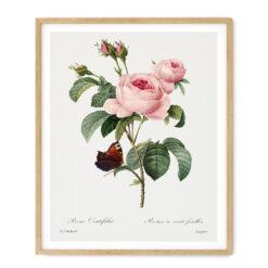 Tavla vintage ros