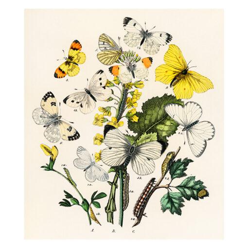 Tavla med blommotiv