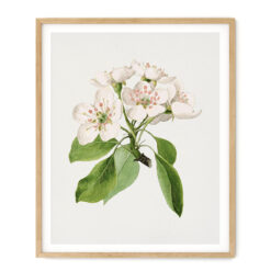 Tavla med motiv av päronblom